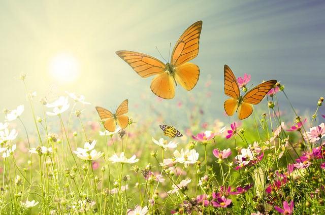 Primavera e o Novo Ciclo